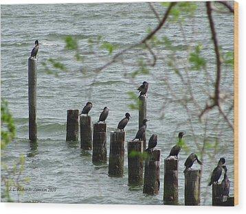 York River Cormorants Wood Print
