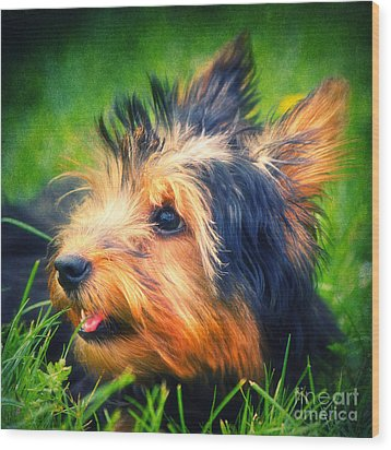 Yorki Wood Print by Angela Doelling AD DESIGN Photo and PhotoArt