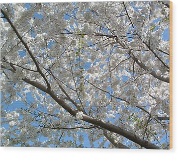 Yoshino Cherry Blossoms Wood Print