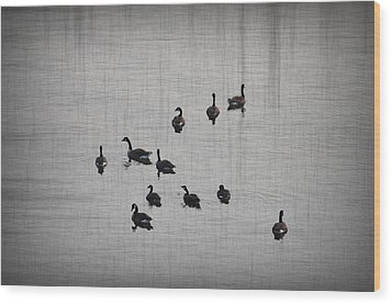 You Better Get Your Ducks In A Row Wood Print by Bill Cannon