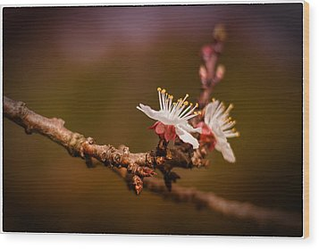Wood Print featuring the photograph You Make Me Blossom by Tim Nichols