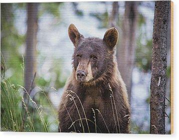 Young Black Bear Wood Print by Dan Pearce