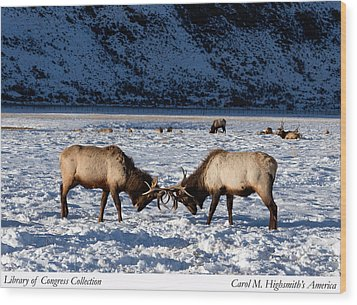 Young Bull Elk In Jackson  Hole In Wyoming Wood Print by Carol M Highsmith