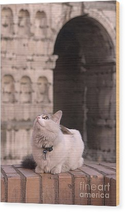 Young Cat Old Monument Wood Print by Fabrizio Ruggeri