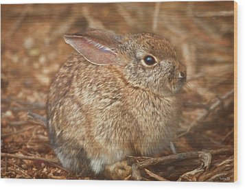 Young Cottontail In The Morning Wood Print