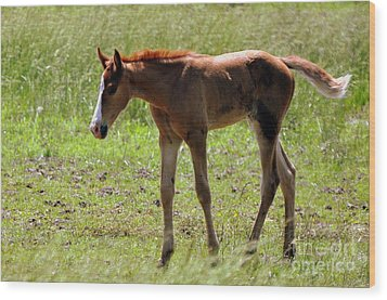 Young Foal Wood Print by Marty Koch