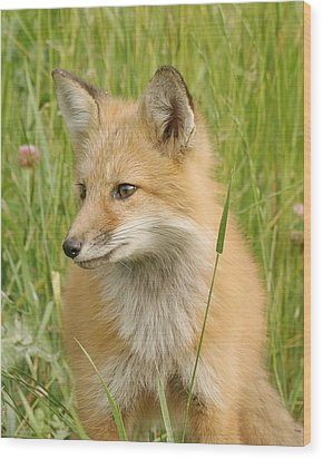 Wood Print featuring the photograph Young Fox by Doris Potter