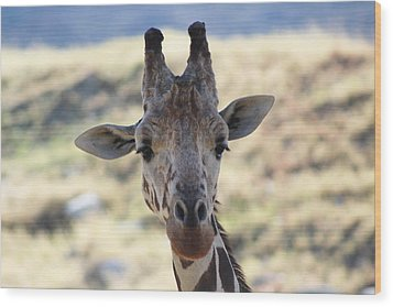 Young Giraffe Closeup Wood Print by Colleen Cornelius
