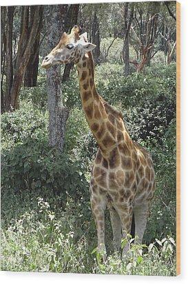 Young Giraffe Wood Print