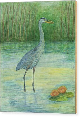 Young Great Blue Heron Wood Print