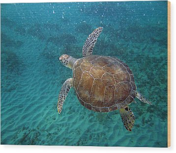 Young Green Turtle Wood Print by Kimberly Mohlenhoff