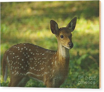 Wood Print featuring the photograph Young Indian Spotted Deer by Jacqi Elmslie