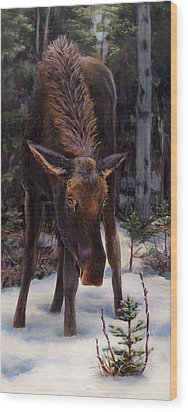 Wood Print featuring the painting Young Moose And Pussy Willows Springtime In Alaska Wildlife Painting by Karen Whitworth