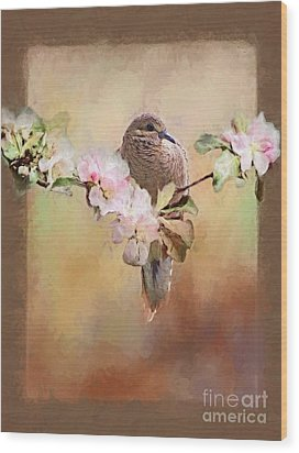 Young Morning Dove Wood Print by Suzanne Handel