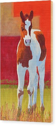 Young Pinto Wood Print by Nancy Jolley