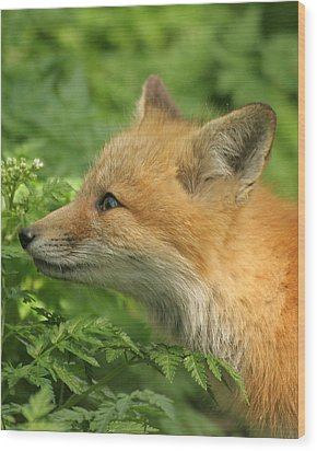 Wood Print featuring the photograph Young Red Fox In Profile by Doris Potter