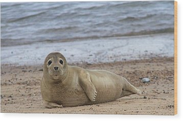 Young Seal Pup On Beach - Horsey, Norfolk, Uk Wood Print by Gordon Auld