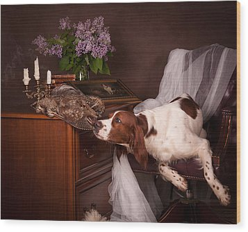 Young Setter With Lilac... Wood Print