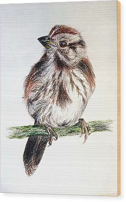 Wood Print featuring the painting Young Sparrow by Sibby S