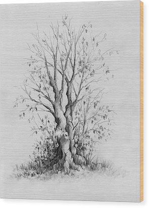 Young Tree Wood Print by Rachel Christine Nowicki