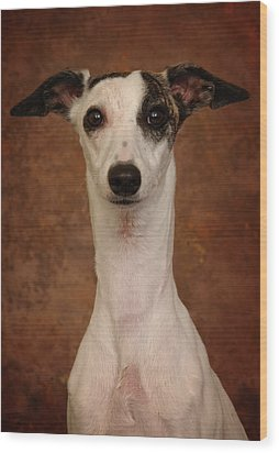 Wood Print featuring the photograph Young Whippet by Greg Mimbs