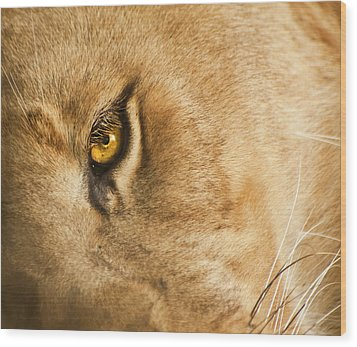 Your Lion Eye Wood Print