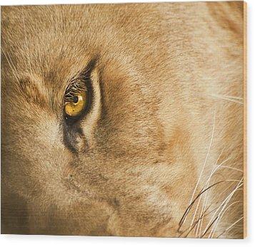 Your Lion Eye Wood Print by Carolyn Marshall