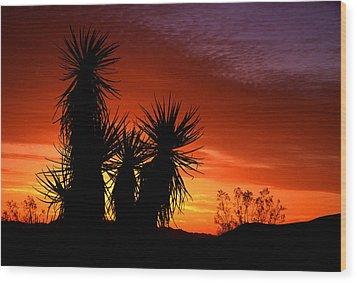 Yucca Sunrise Wood Print by Eric Foltz