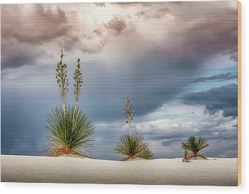 Yucca Three Wood Print by James Barber