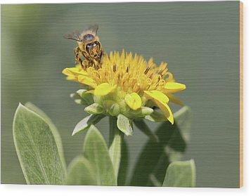 Yumm Pollen Wood Print by Christopher L Thomley