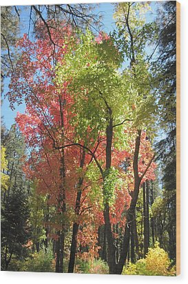 Yummy Fall Colors Wood Print by Sandy Tracey