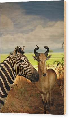 Zebra And Antelope Wood Print by Marilyn Hunt