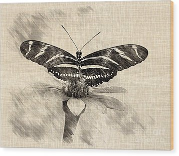 Zebra Butterfly Sketch Wood Print