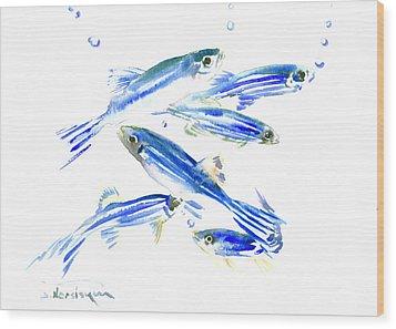 Zebra Fish, Danio Wood Print