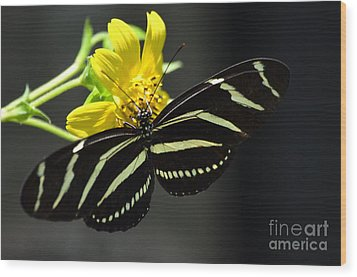 Zebra Heliconian Butterfly Wood Print by Kathy Gibbons