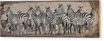 Wood Print featuring the photograph Zebra Herd Rock Texture Blend Wide by Mike Gaudaur