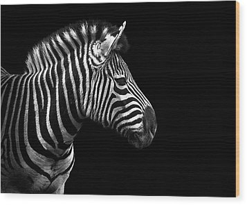 Zebra In Black And White Wood Print by Malcolm MacGregor