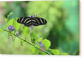 Wood Print featuring the photograph Zebra Longwing Butterfly by Corinne Rhode