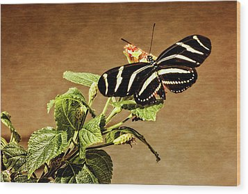 Wood Print featuring the photograph Zebra Longwing by Dawn Currie