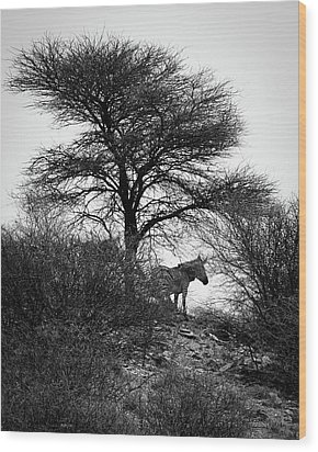 Wood Print featuring the photograph Zebra On A Hill  by Ernie Echols