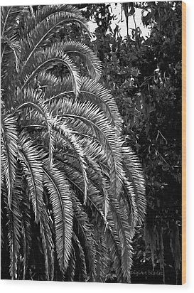 Wood Print featuring the photograph Zebra Palm by DigiArt Diaries by Vicky B Fuller