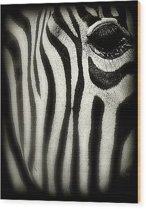 Zebra Wood Print by Perry Webster