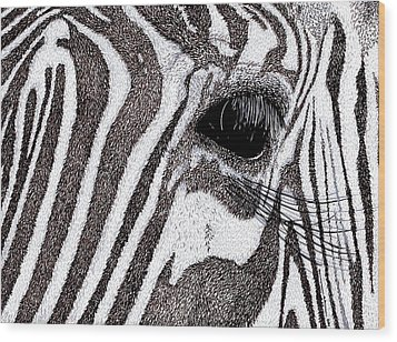 Zebra Portrait Wood Print by Karl Addison
