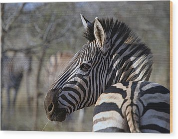 Wood Print featuring the photograph Zebra by Riana Van Staden