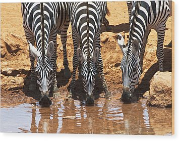 Zebras At The Watering Hole Wood Print by Marion McCristall