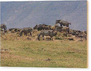 Zebras In The Ngorongoro Crater, Tanzania Wood Print by Aidan Moran