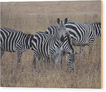 Zebras Walking In The Grass 2 Wood Print
