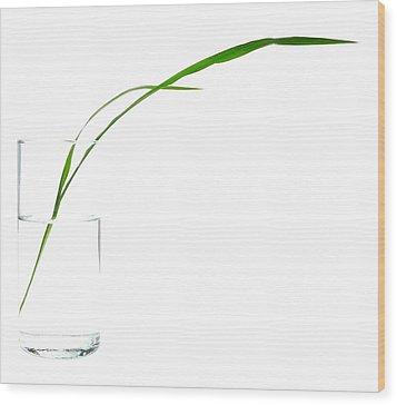 Zen Grass Wood Print