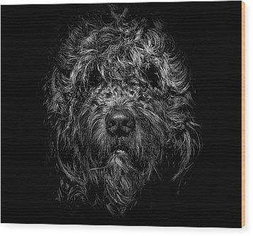 Ziggy Portrait No 1 Wood Print by Brian Carson