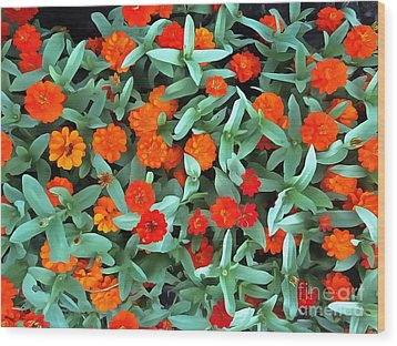 Wood Print featuring the photograph Zinnia Flower - Profusion Orange by Janine Riley